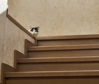 10 Common Cat Behavior Myths Decoded