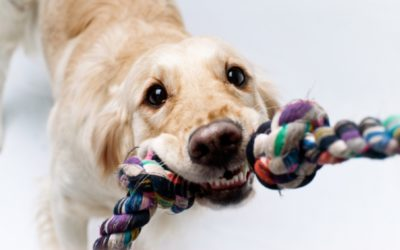 10 SIMPLE AND FUN INDOOR GAMES FOR YOUR DOG