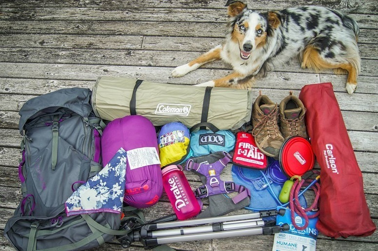 Should You Go Camping With A Dog?