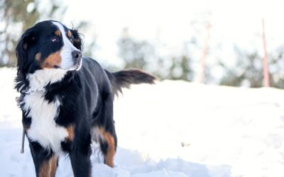 Five ways to protect pets this winter
