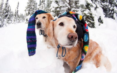 Cold-Weather Pet Tips